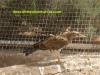 centro-recuperacion-fauna-el-valle-rapaces