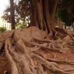 Los monumentos naturales de la ciudad de Murcia
