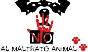 Manifestacion contra Maltrato Animal Murcia Manifestación contra el maltrato hacia los animales