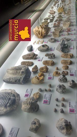 Museo Arqueologico Cehegin Un vecino dona 2000 fósiles al Museo Arqueológico de Cehegín