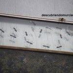 Fare Ala plaza de las Flores Murcia1 150x150 Una invasión de hormigas gigantes en la Plaza de las Flores de Murcia