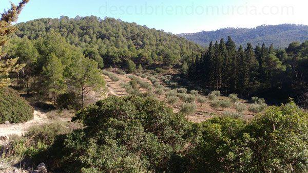 Sierra Espuna Día Internacional de los Bosques 2018 Región de Murcia
