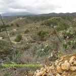 La biomasa, una alternativa energética para la industria murciana