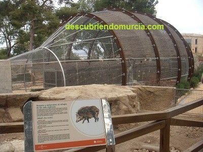 Aviario Rapaces Murcia Visitamos el Centro de Recuperación de Fauna Silvestre El Valle