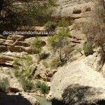 El Fartet, un pececillo en peligro que tiene su casa en la Región de Murcia