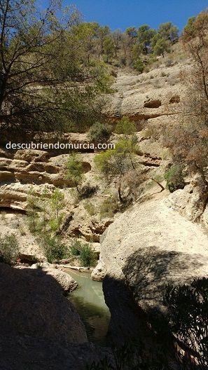 rio Chicamo Macisvenda El Fartet, un pececillo en peligro que tiene su casa en la Región de Murcia