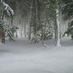 Nieve en Sierra Espuña el 19 enero 2017. Foto: Antonio Morente