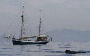 ballenas delfines Murcia 300x185 Ballenas y delfines en las costas de la Región de Murcia