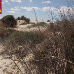Preparando las dunas del Mar Menor para el otoño