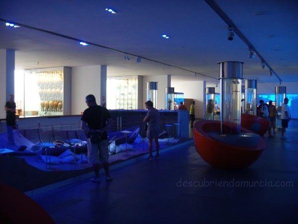 museo cartagena arqua Trece colmillos de elefante, un regalo en Isla Grosa