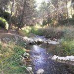 Nutria en el río Segura, una especie que tenemos que proteger