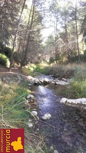 rio alharabe moratalla Nutria en el río Segura, una especie que tenemos que proteger