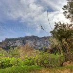 Bonitas fotos de la floración en los campos de la Región de Murcia