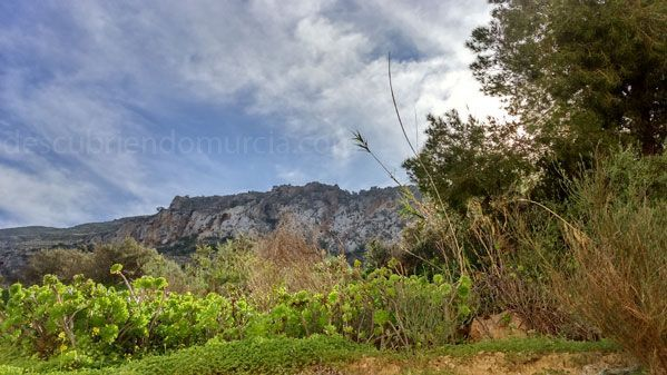 La Azohia Cartagena Bonitas fotos de la floración en los campos de la Región de Murcia
