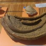 el-valle-murcia-fosiles