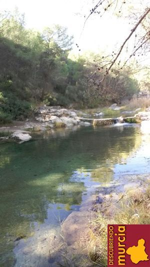 Alharabe Moratalla El galápago leproso autóctono que resiste en aguas contaminadas