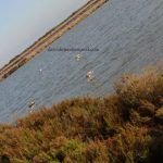Las Salinas de San Pedro en la Migratory Birds for People