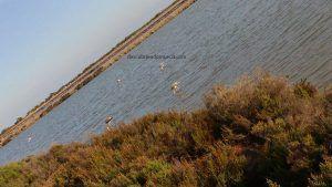 Salinas San Pedro Pinatar 300x169 Día Mundial de los Humedales 2018 en la Región de Murcia
