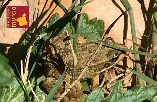 el valle carrascoy ranas sapos Charcas para anfibios en El Valle y el mosquito tigre