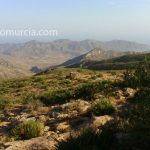 Ciprés de Cartagena, único en la Sierra de Cartagena – La Unión
