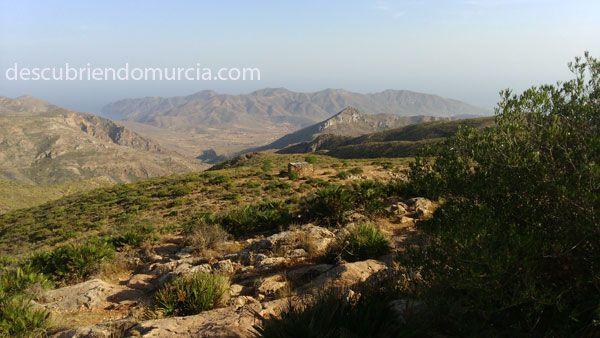 Cabo Tinoso Cartagena Ciprés de Cartagena, único en la Sierra de Cartagena   La Unión